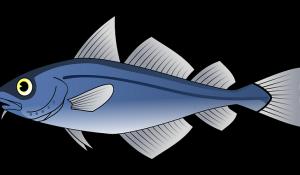 poisson_avril_clash