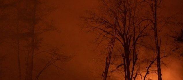 Un incendie ravageant une forêt la nuit