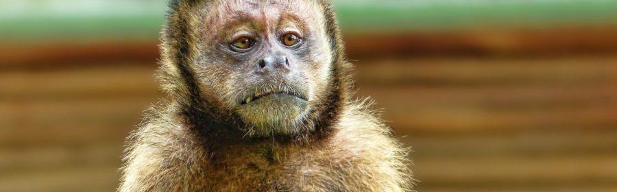 Animaux Beauval Coronavirus zoo épidémie confinement